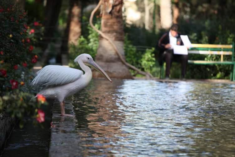 گزارش تصویری باغ گلشن طبس
