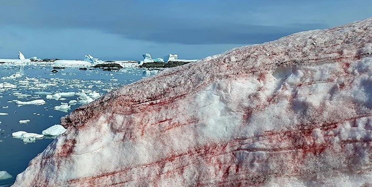 برف صورتی در قطب جنوب+عکس